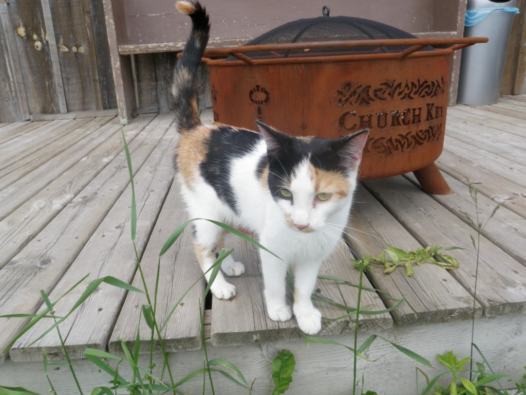 .....where we met 'Churchkey', the brewery's recently adopted and very friendly mascot.