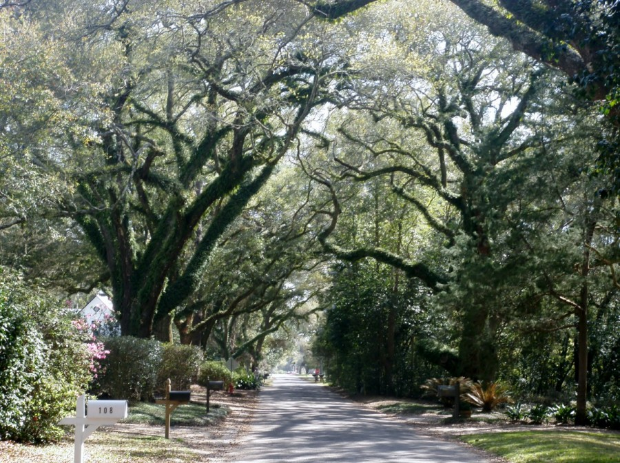 We enjoyed exploring Fairhope's leafy residential streets on our bikes.