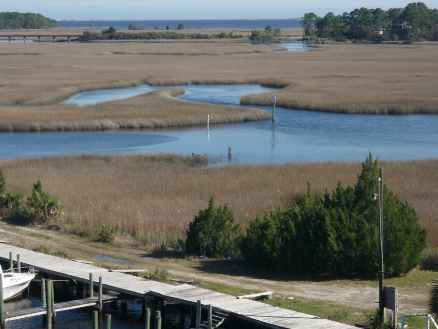 This is a portion of the  Carrabelle River estuary.