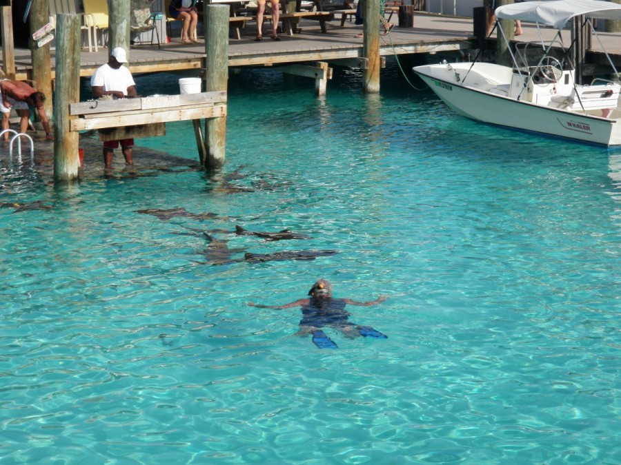 At Compass Cay, the Captain got to swim with the sharks (fortunately, harmless nurse sharks).