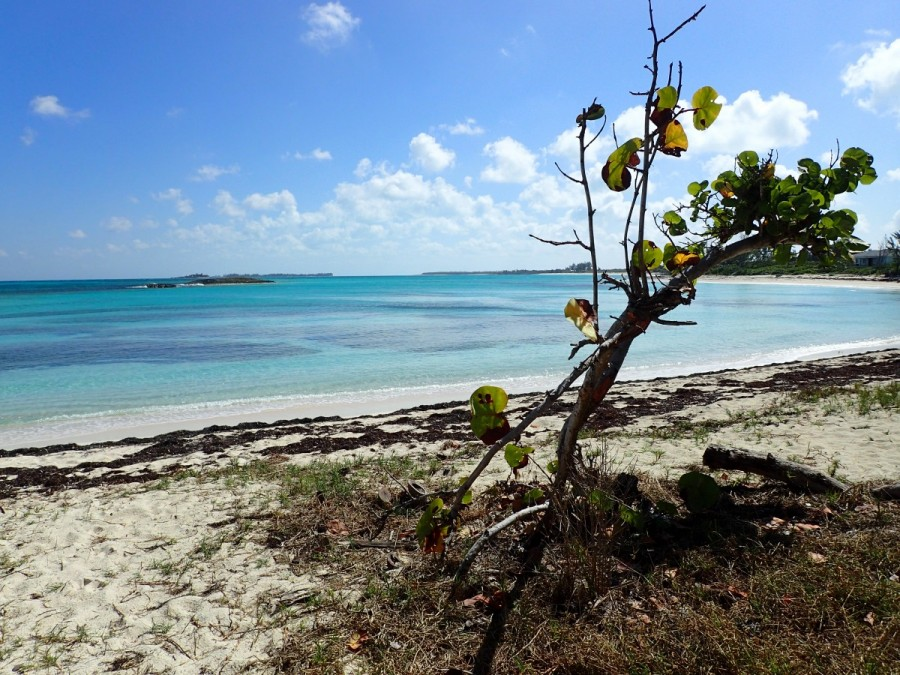 A nice cove for sunbathing and swimming on the Atlantic side, Green Turtle Cay