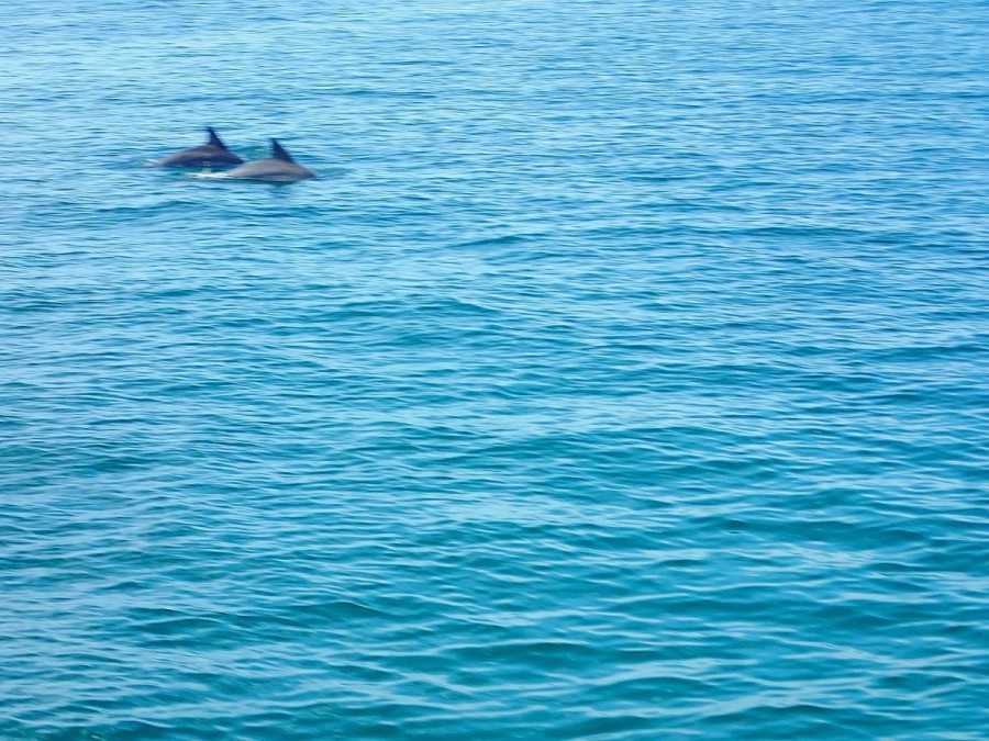 .....and dolphins.