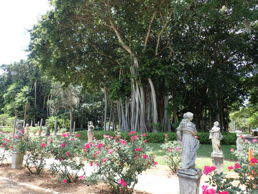 The grounds of the John and Mabel Ringling estate, constructed during the 1920's , are large, lush and beautiful; lovers of both Italy and art, their former home is filled with Italian statues and paintings.