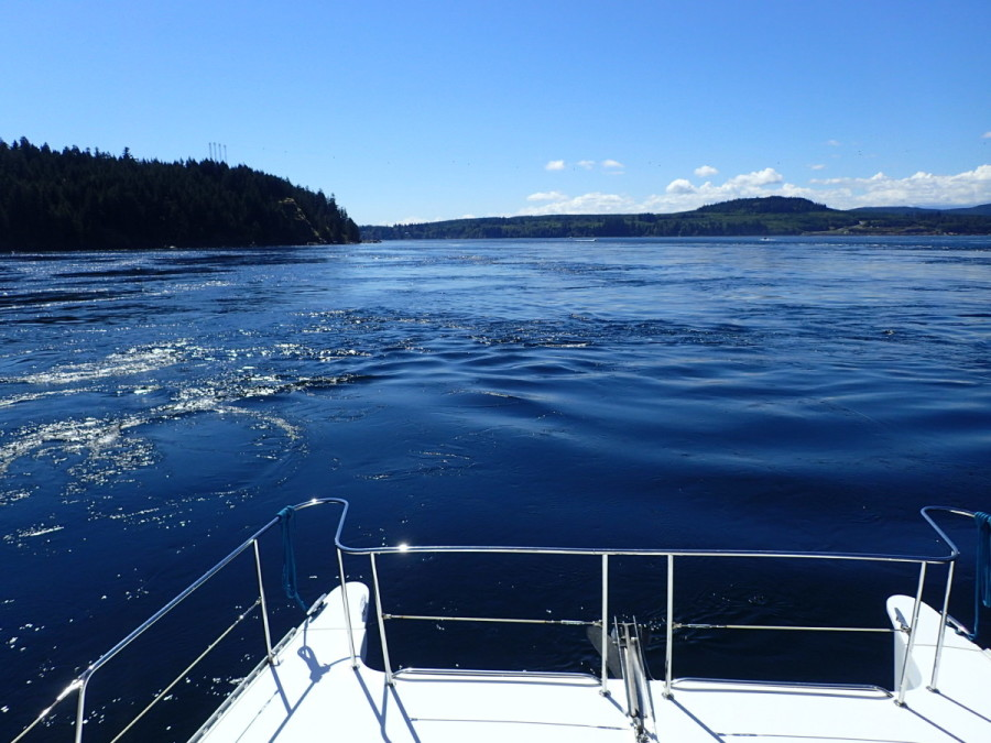 After an overnight stop at Small Inlet on Quadra Island, we tackled infamous Seymour Narrows, just north of Campbell River; maximum currents for the morning were 13 knots, howver by the time of our noon passage the ebb was reduced to 'only' 6 knots, and the seas were calm; lots of large boils and whirlpools though, and at the worst reduced to just 7 knots of headway.