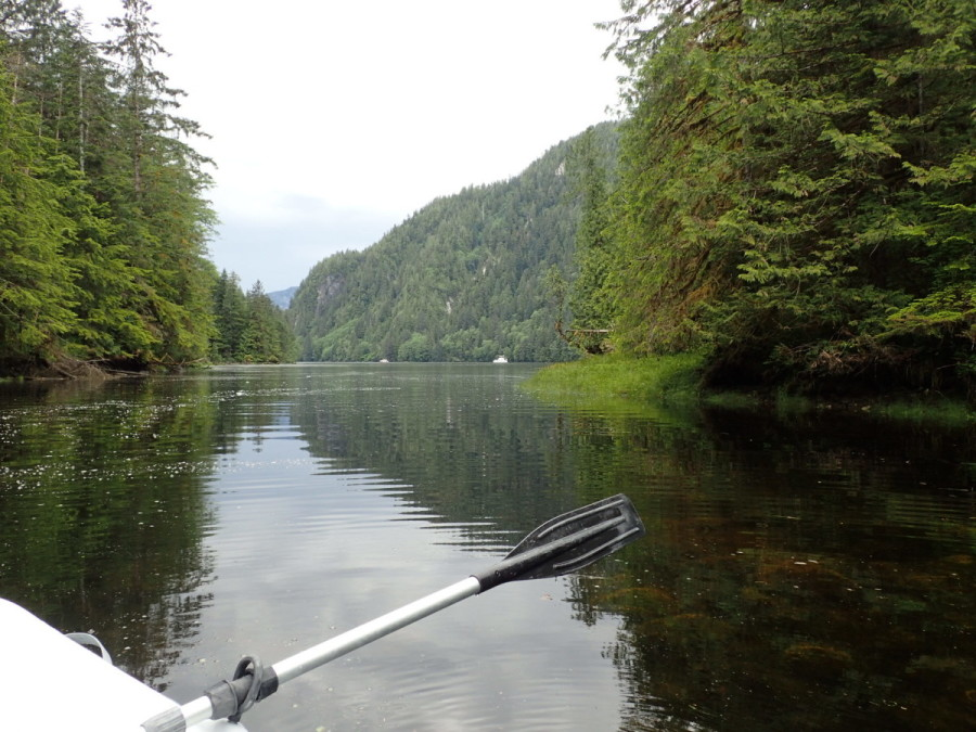 Rowing up the creek looking for bears - no sightings so far - at our anchorage at Bottleneck Inlet.
